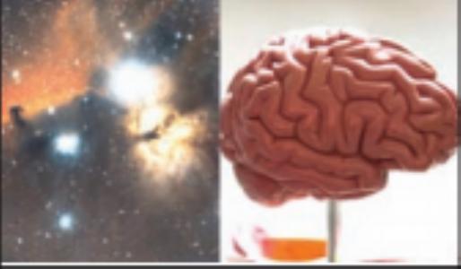 विश्व व मानवी मेंदूत काय आहे साम्य?