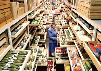 प्राणी-पक्षी प्रजातींच्या नमुन्यांचे संग्रहालय