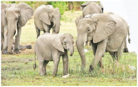 छत्तीसगडमधील हत्तींची आहेत लडीवाळ नाव