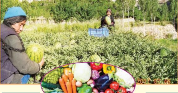 हिमवृष्टीतही पिकतात लडाखमध्ये भाज्या